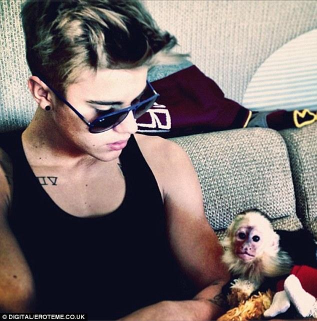 обезьяна бибера