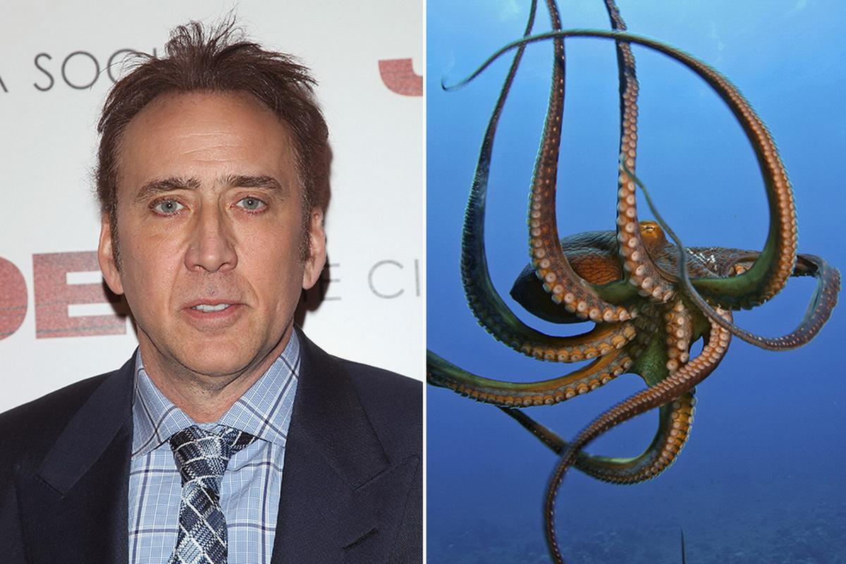 осьминог кейджа
