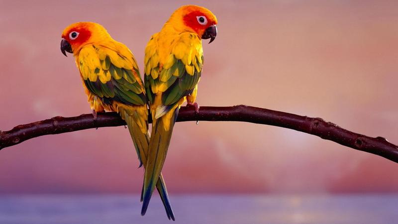 дикий попугай