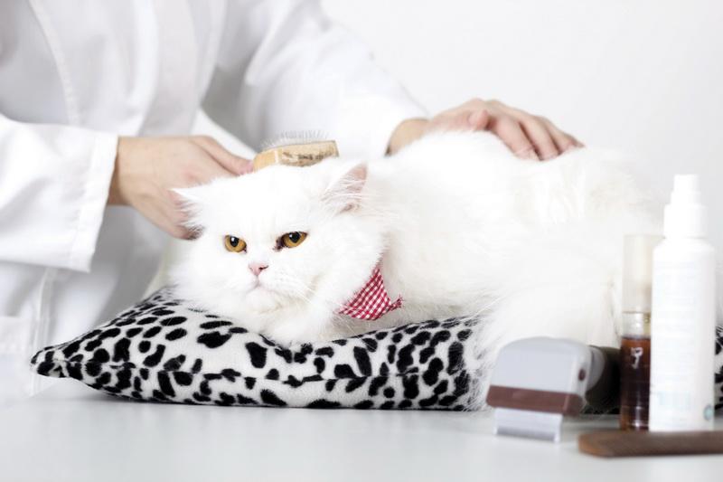 чистить кошачьи уши