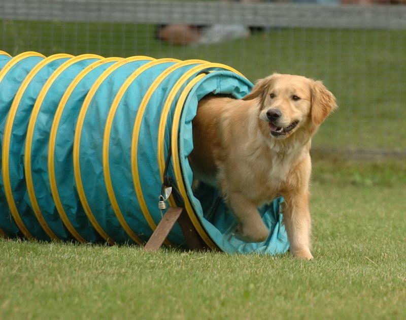 гемблер собака