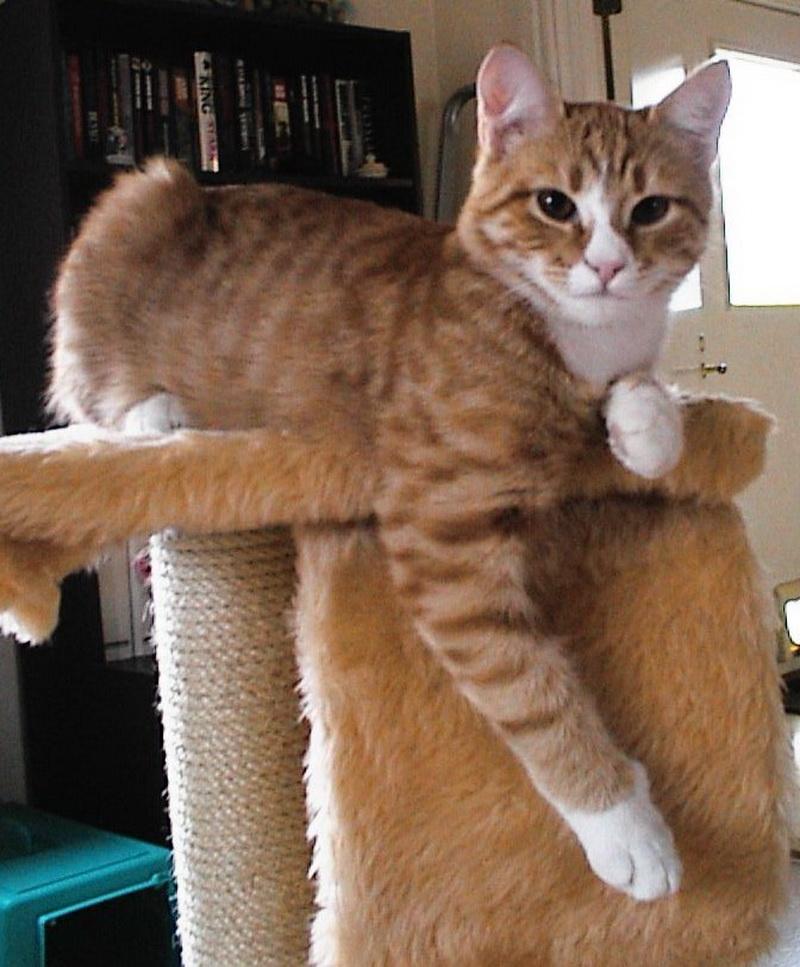 кошка домик
