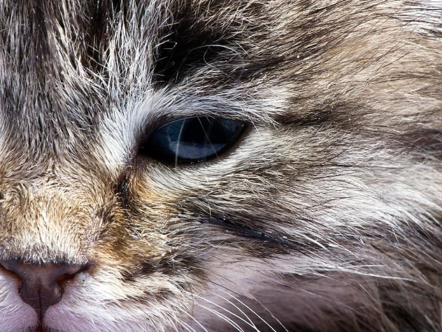 конъюнктивит кошек