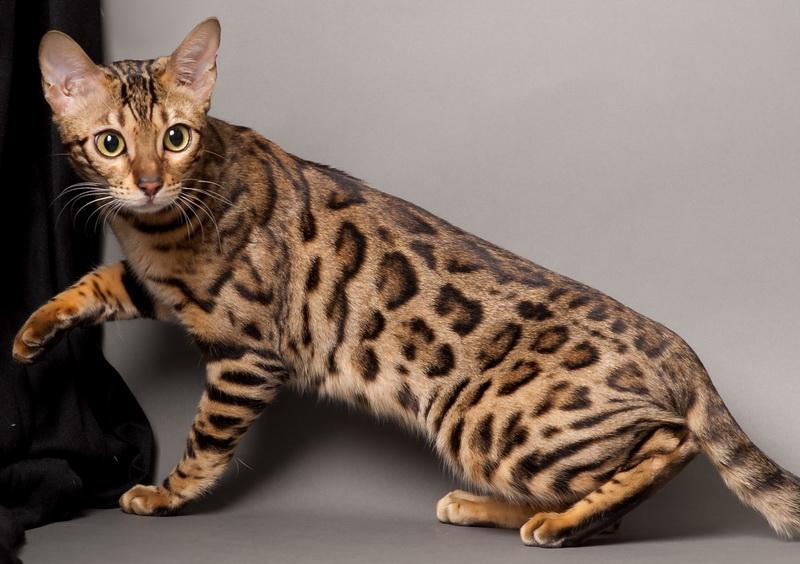 гельминтоз кошки