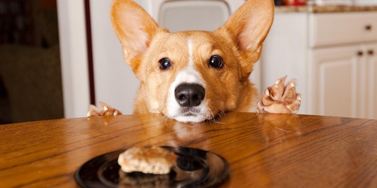 секреты собаки