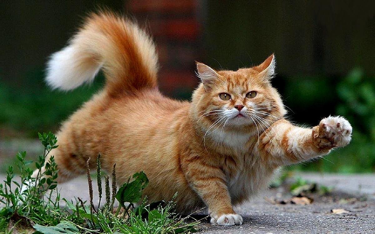 кот идет