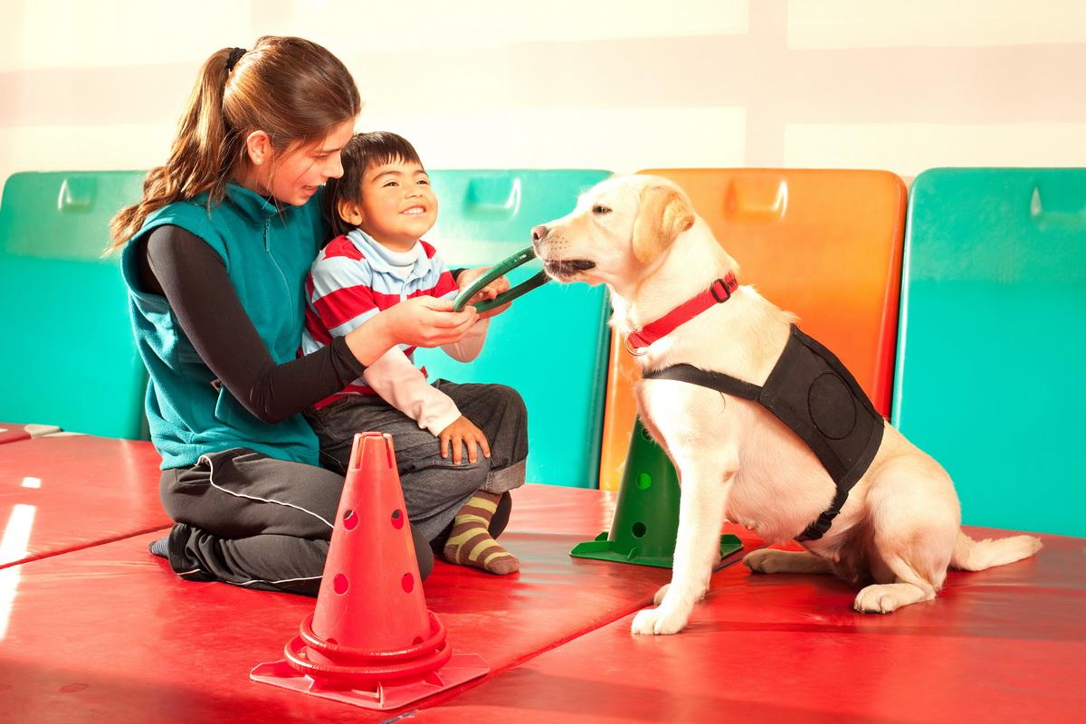 собака терапия