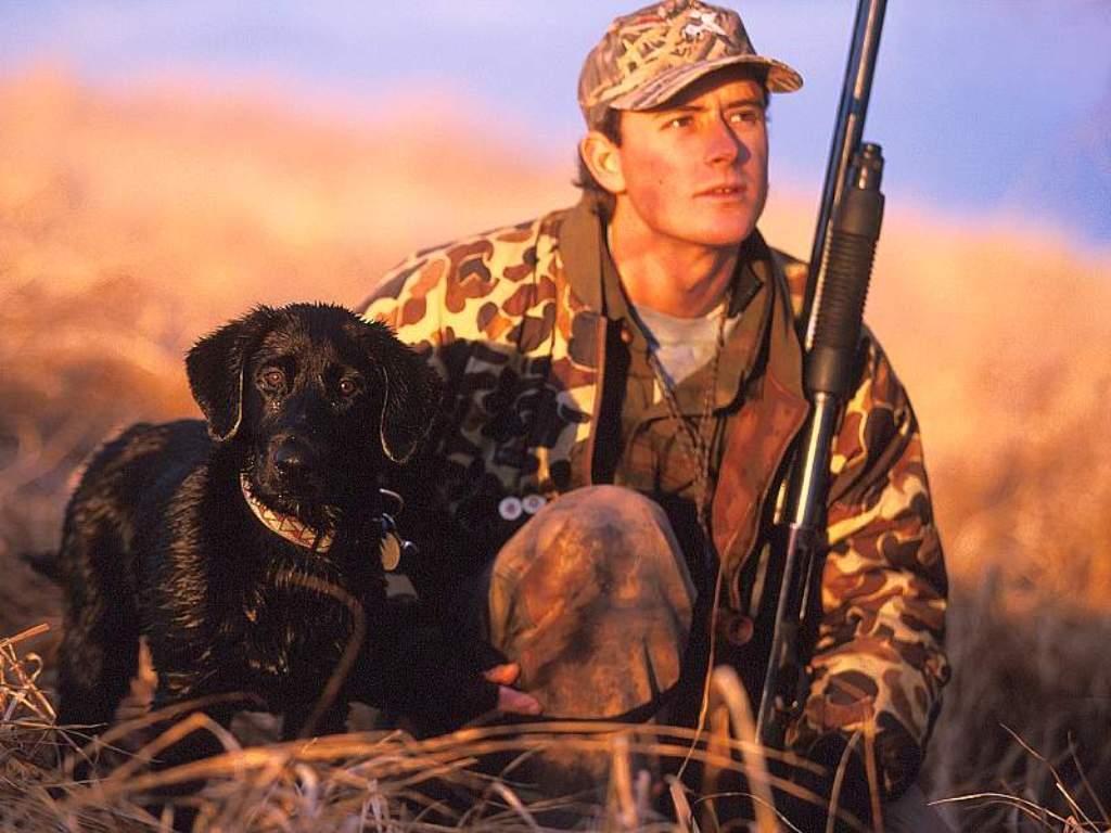 собака охотник