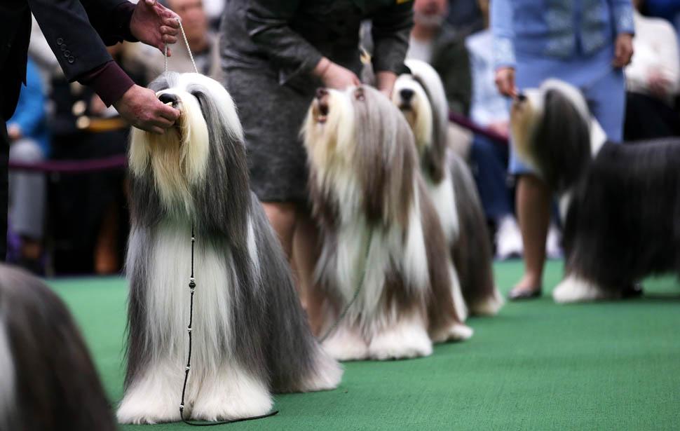 собака модель