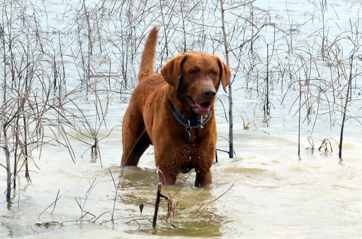 собака сыщик