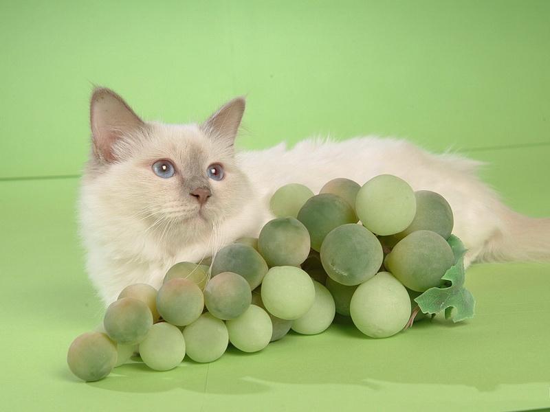 пища для кошек