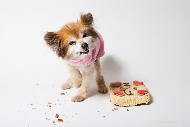 пища для собак
