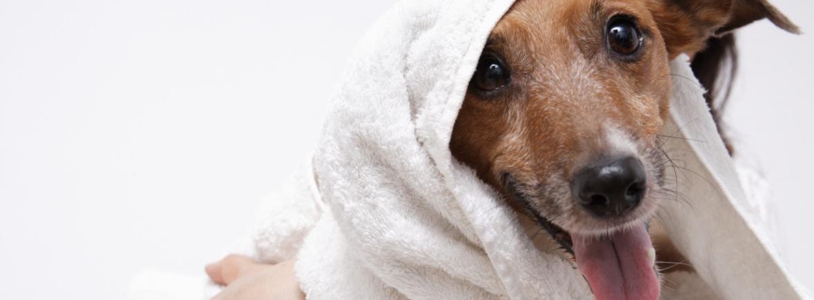 собака в зоосалоне