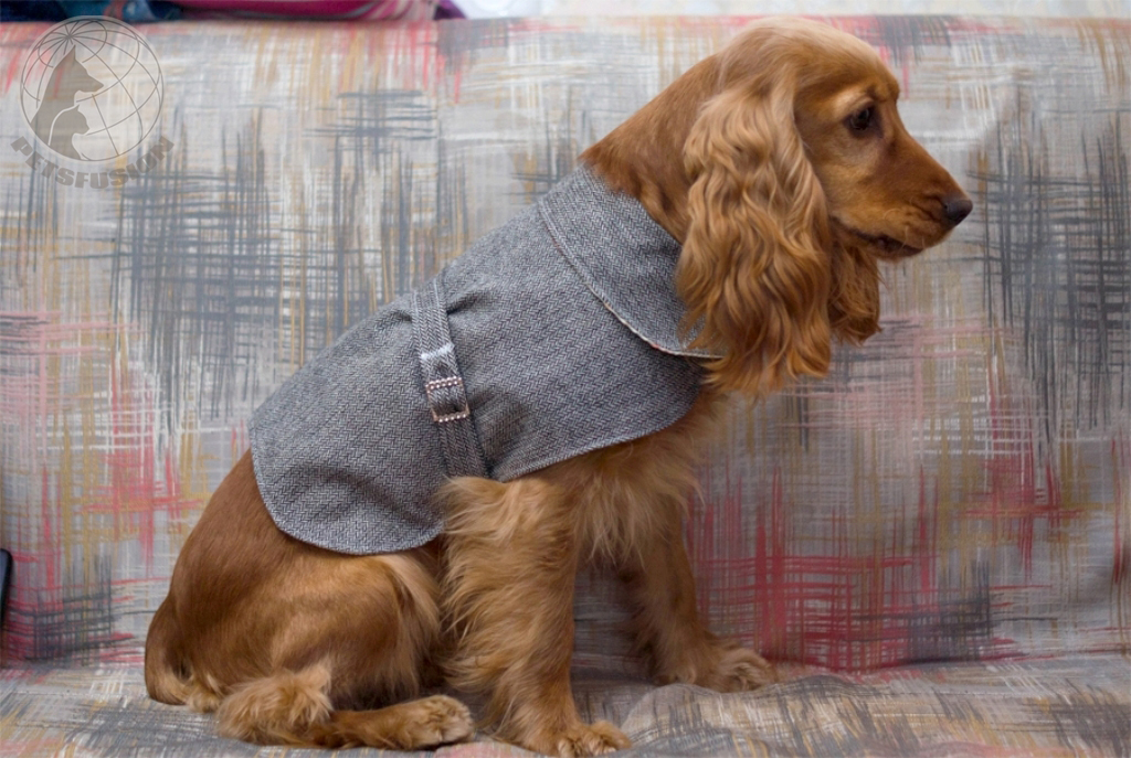 Форум собаки одежда
