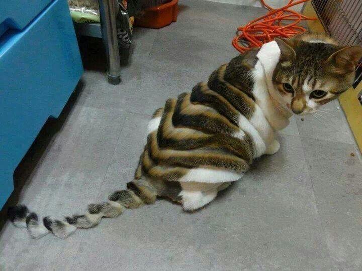 кошка в зоосалоне
