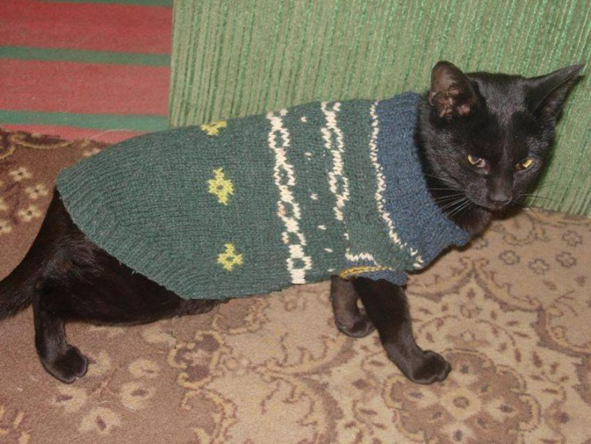 кофточка для кошки
