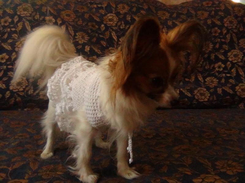 платье для животных