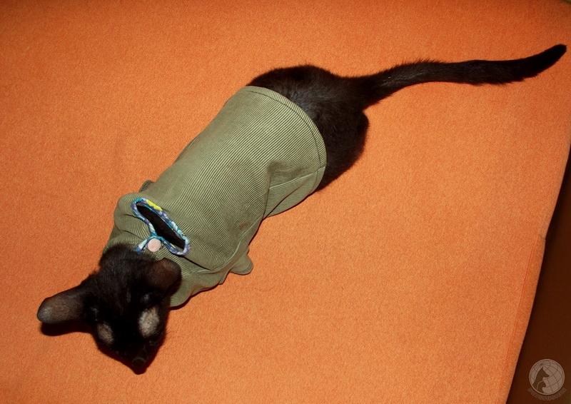 Платье на кошку сшить 99