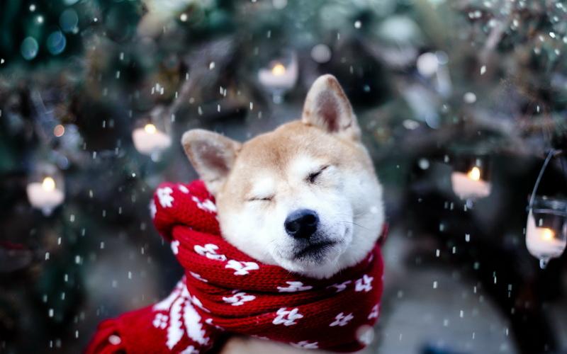 Image result for собака зимой