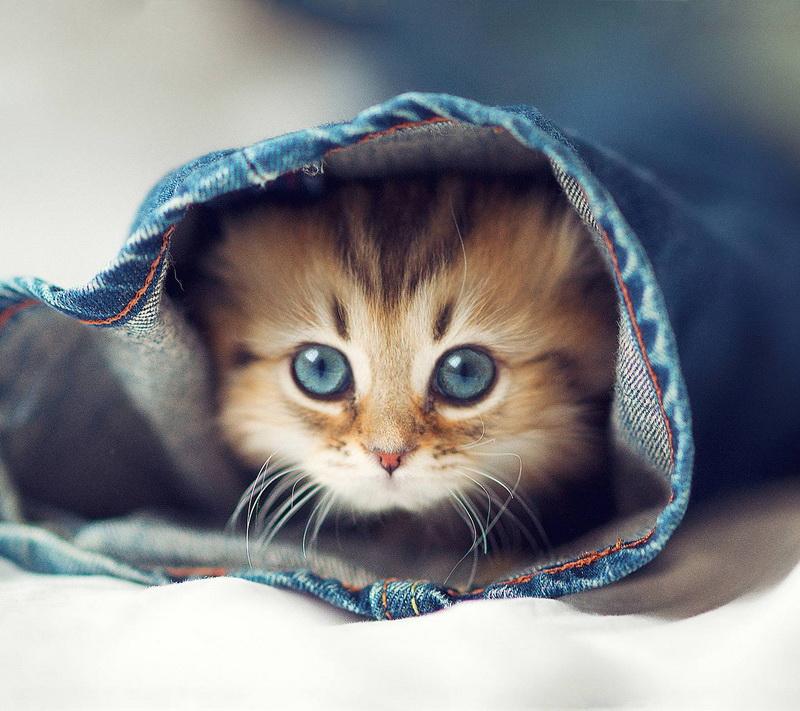 покупка для кошки