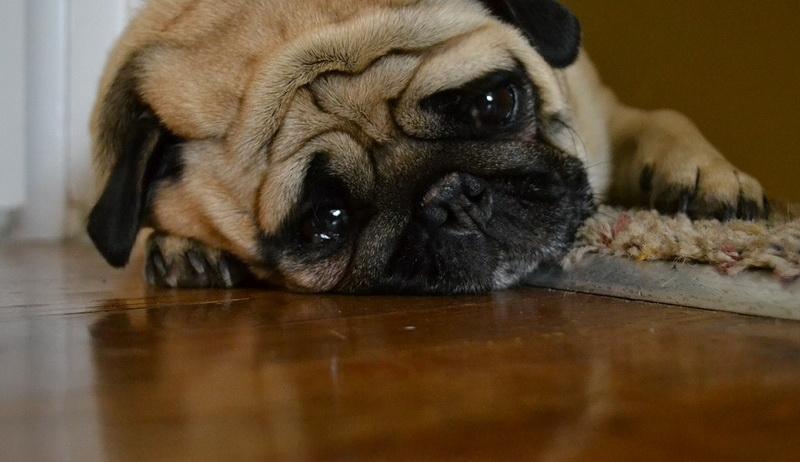 щенок кормление