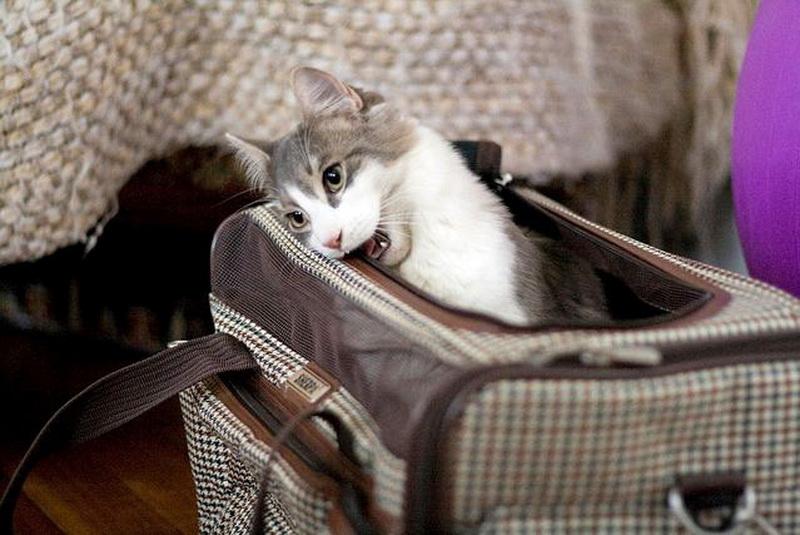 кошачья переноска