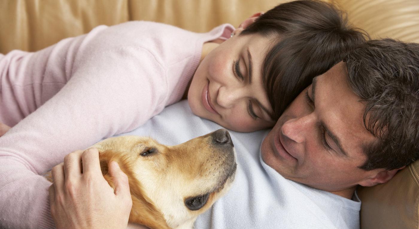 аллергия на собак