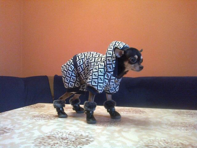 мода для животных