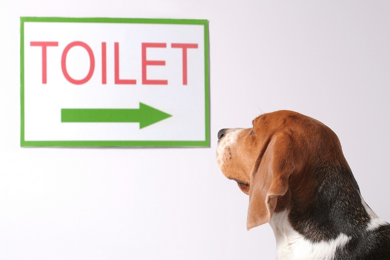 щенок туалет