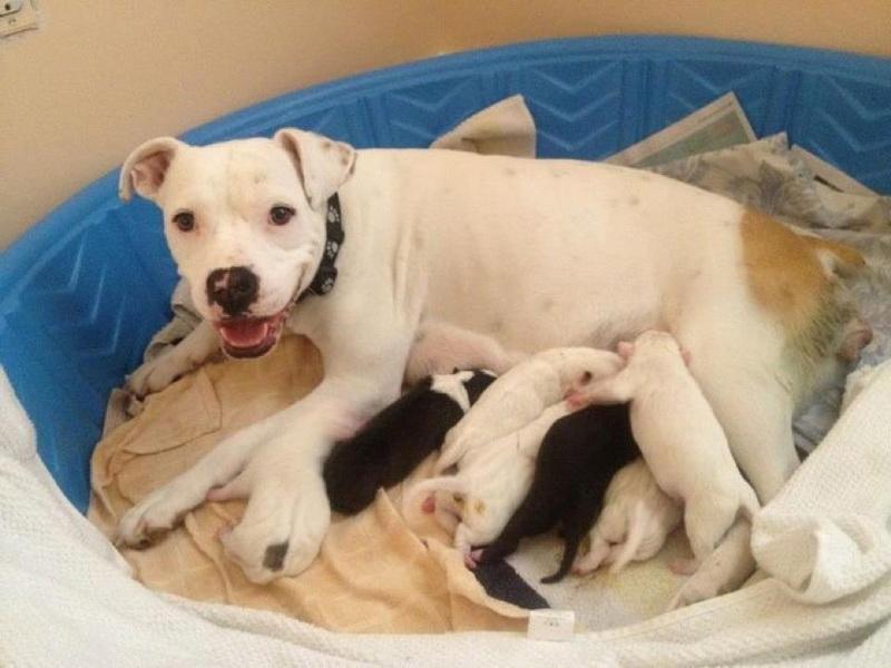 кормление новорожденной собаки