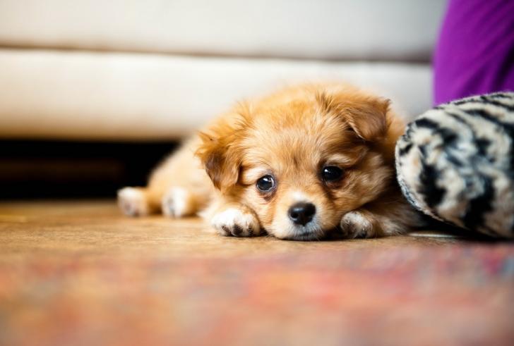 щенок грызет