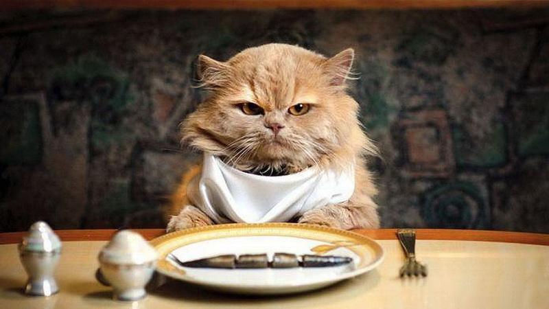 кошка детское питание