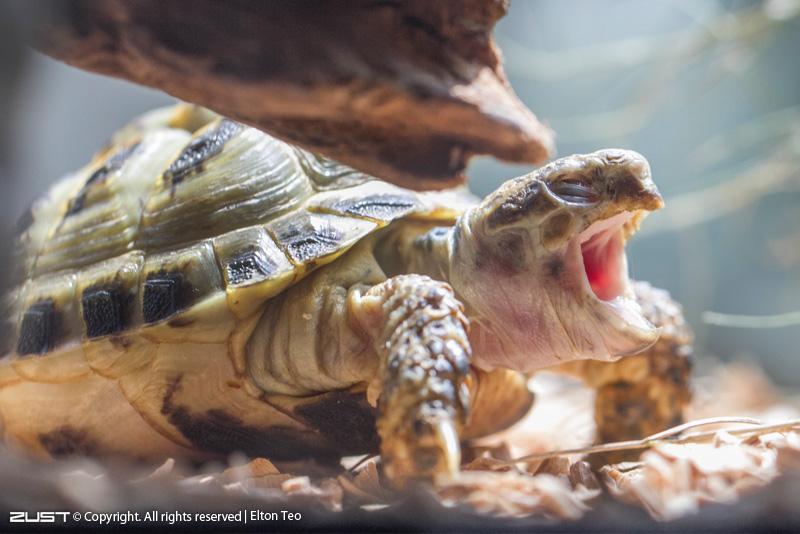 кормление черепахи