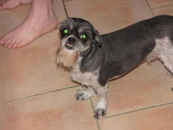 собака стрижка