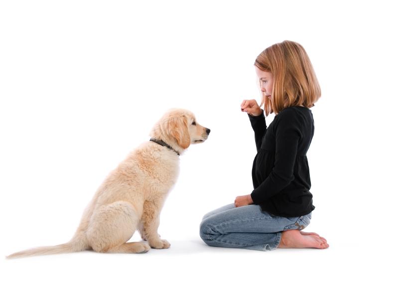 собака голос