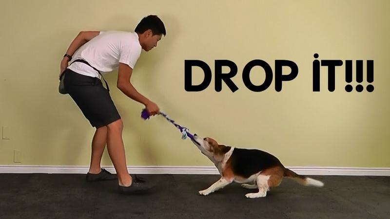 собака дай
