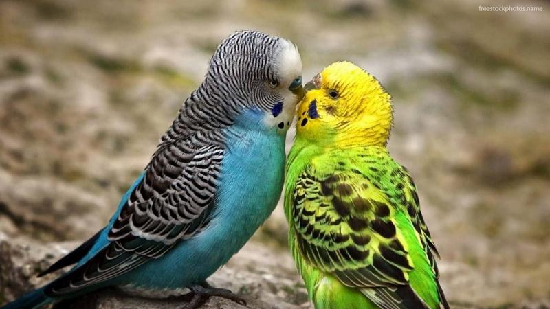 пол попугая