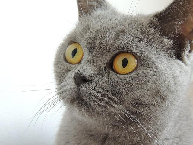 кошка нос