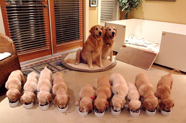 роды у собаки