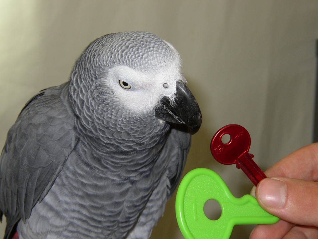 african grey parrots dissertation Download african grey parrot stock photos affordable and search from millions of royalty free images, photos and vectors thousands of images added daily.