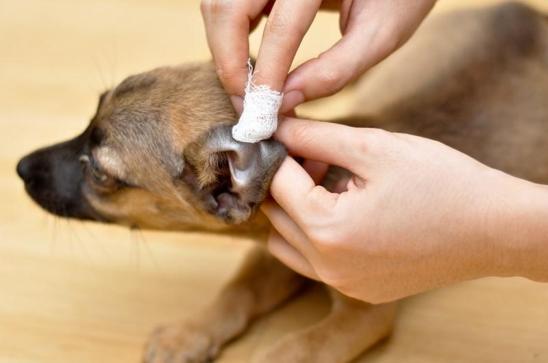 чистим ушки собаке