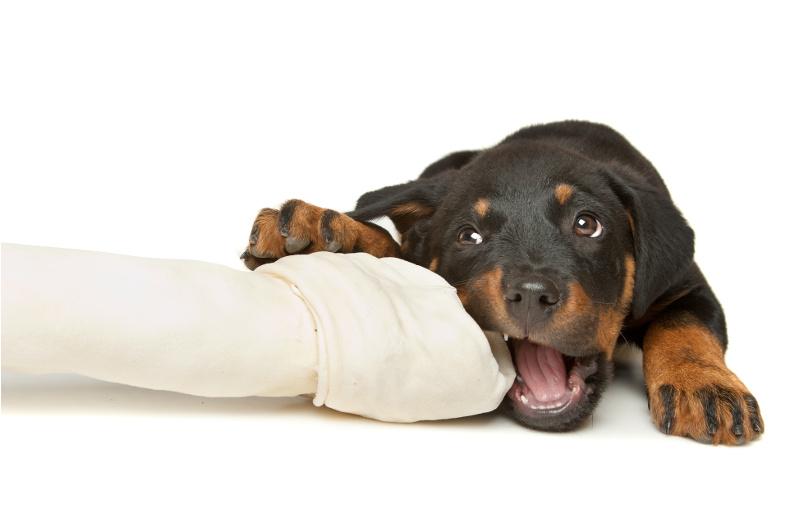 собака ест кости