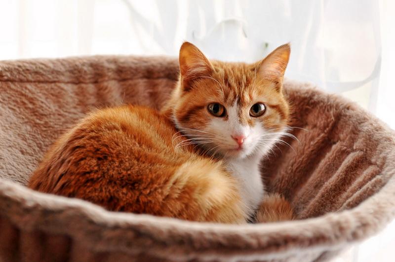 аптечка для кошки