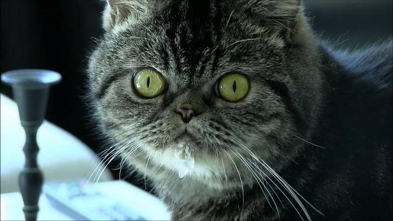 кот пьёт воду