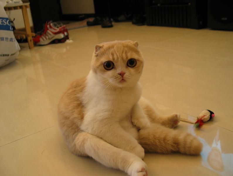 кот в жару