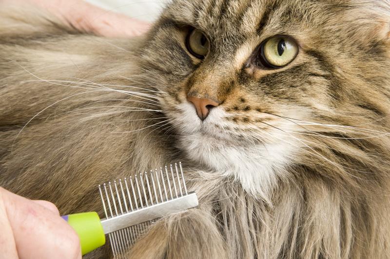 вычесать кошку