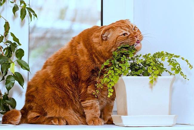 кот и растения