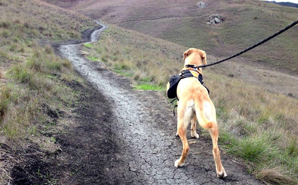 поход с собакой