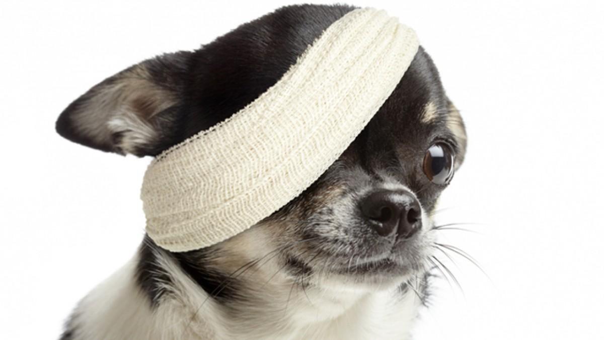 травмы у собак