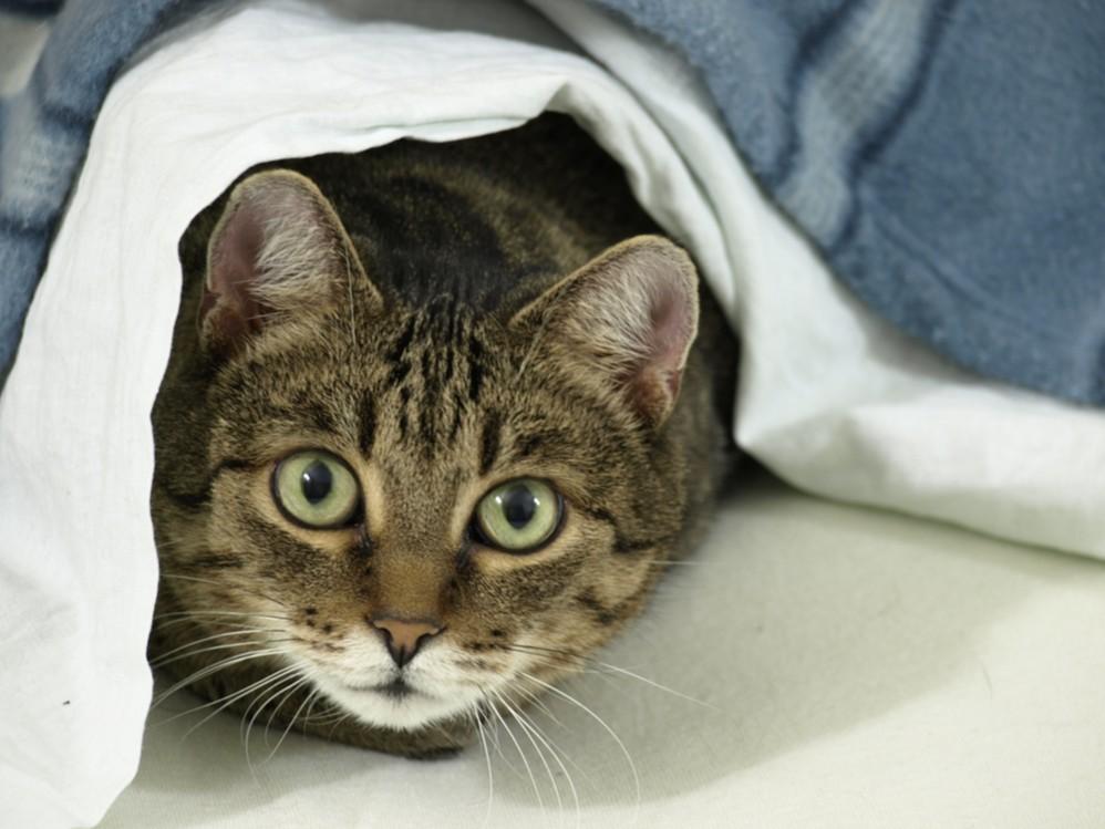 лечим кошку